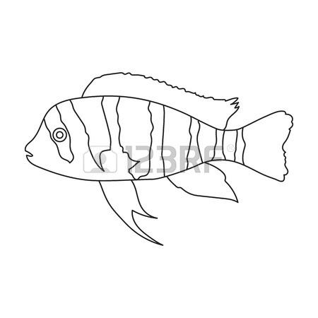 450x450 Frontosa Cichlid (Cyphotilapia Frontosa) Fish Icon Monochrome