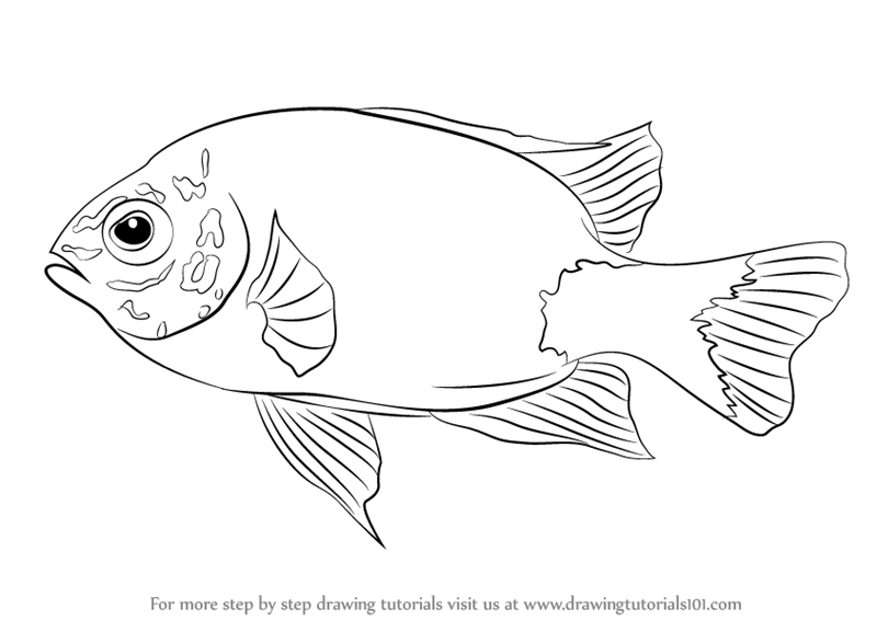 800x566 Learn How To Draw A Damselfish (Fishes) Step By Step Drawing