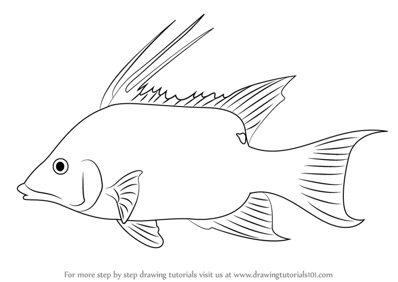 800x566 Learn How To Draw A Mojarra (Fishes) Step By Step Drawing
