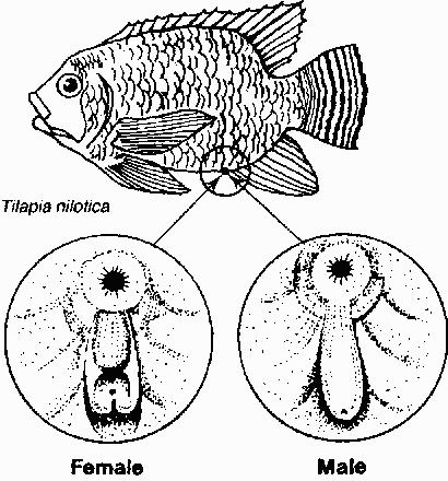 410x440 Better Freshwater Fish Farming Further Improvement The Fish
