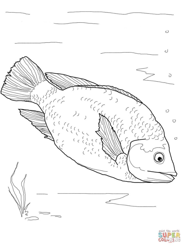 768x1024 Red Tilapia Coloring Page Images