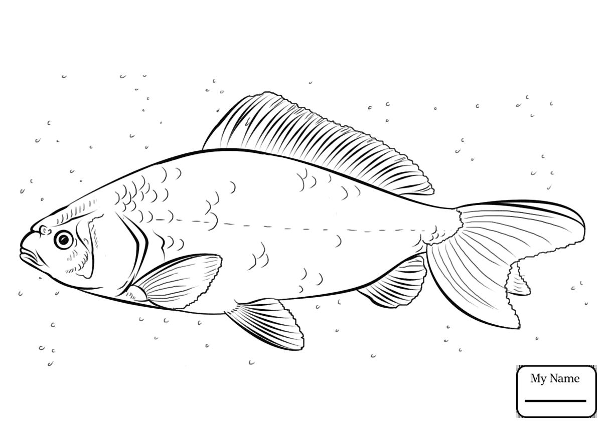 1210x850 Carp Fish Koi Fish Coloring Pages