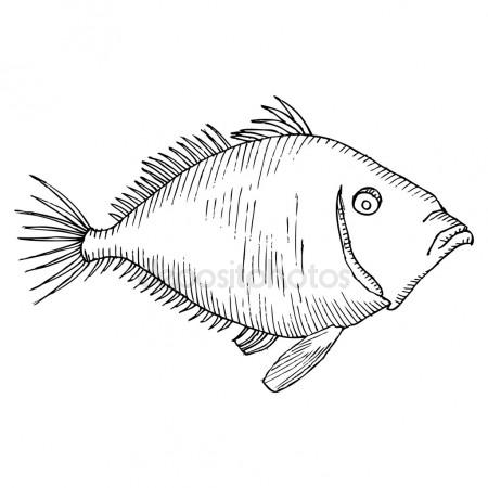 450x450 Black And White Fish Drawing Stock Vector Lineartestpilot