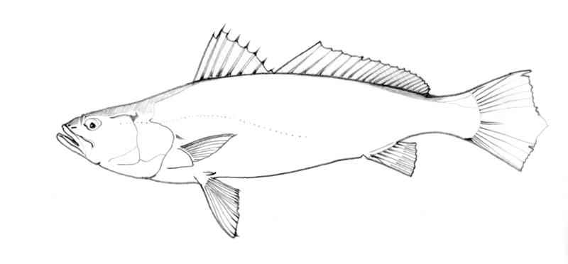800x372 Fish