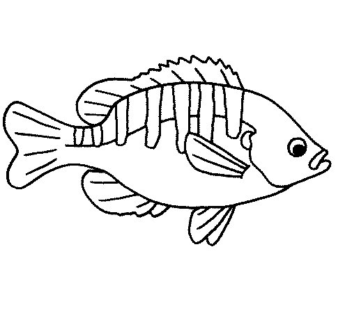 505x470 Fish 4a Coloring Page