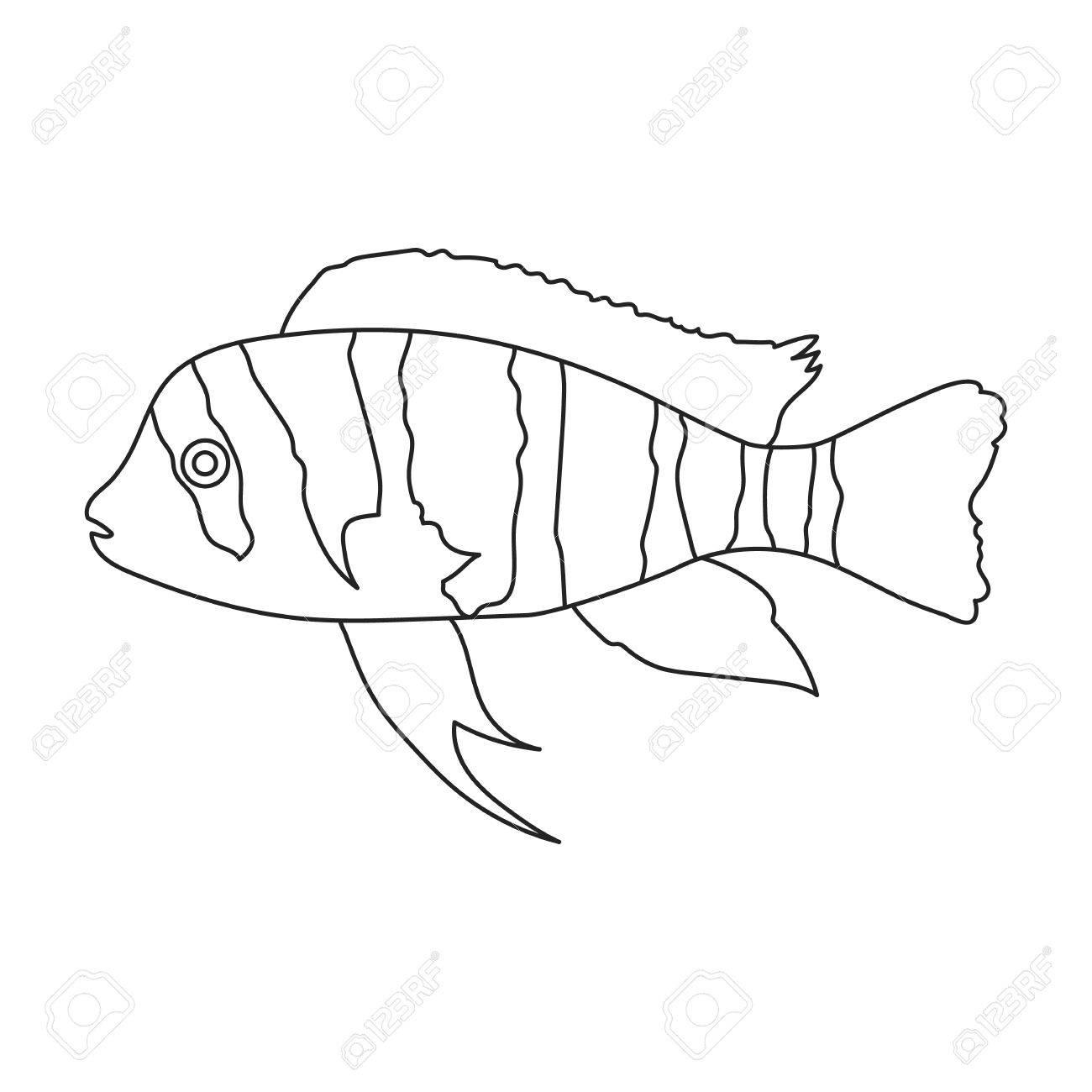 1300x1300 Frontosa Cichlid Cyphotilapia Frontosa Fish Icon Line. Singe