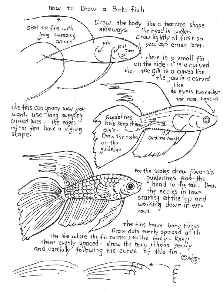 736x968 385 Best How To Fish Frogs Etc. Images On Watercolor