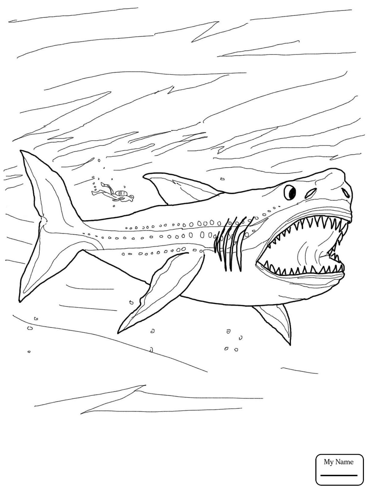 1224x1632 Fish
