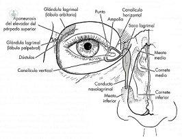 266x203 Eye Diseases