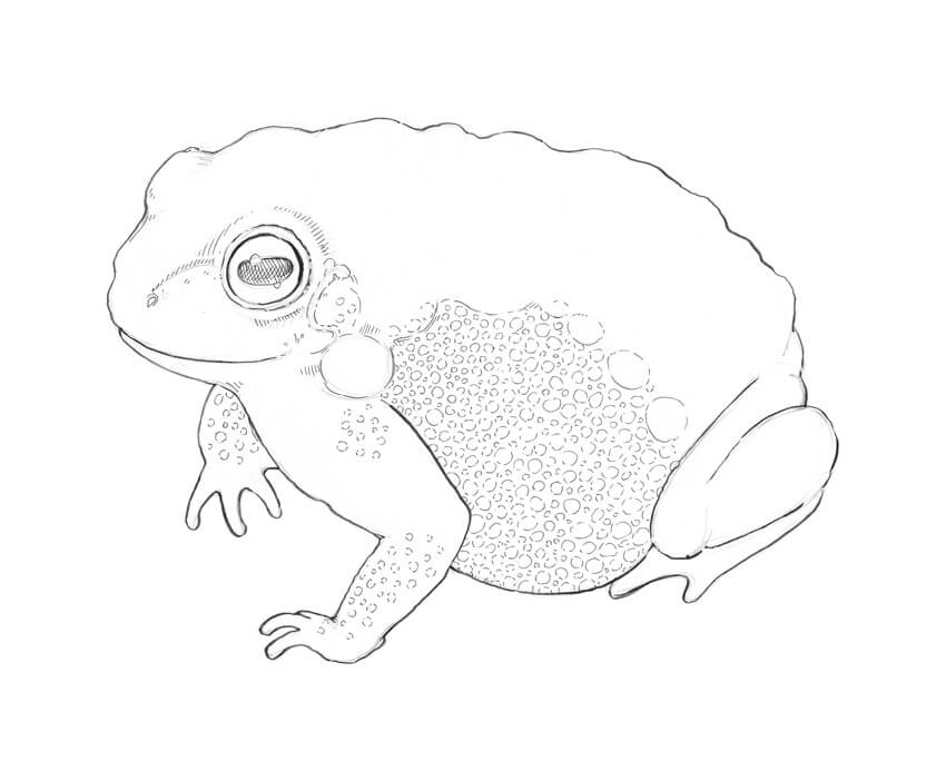 850x684 How To Create Textures With Ink Drawing A Toad Eugenia Hauss