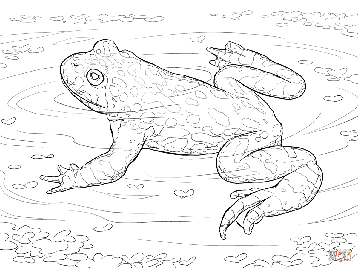 1199x899 Oriental Fire Bellied Toad Coloring Page Free Printable Coloring