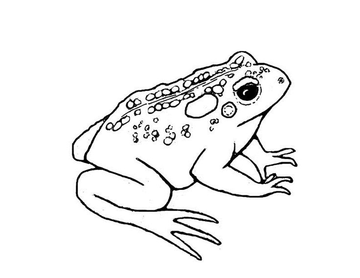 736x568 Coloring Pages Dazzling Coloring Pages Draw A Toad Colorado