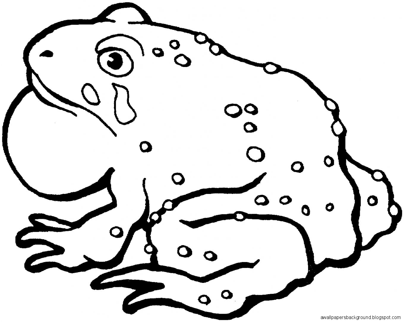 1360x1086 Toad Drawing Wallpapers Background