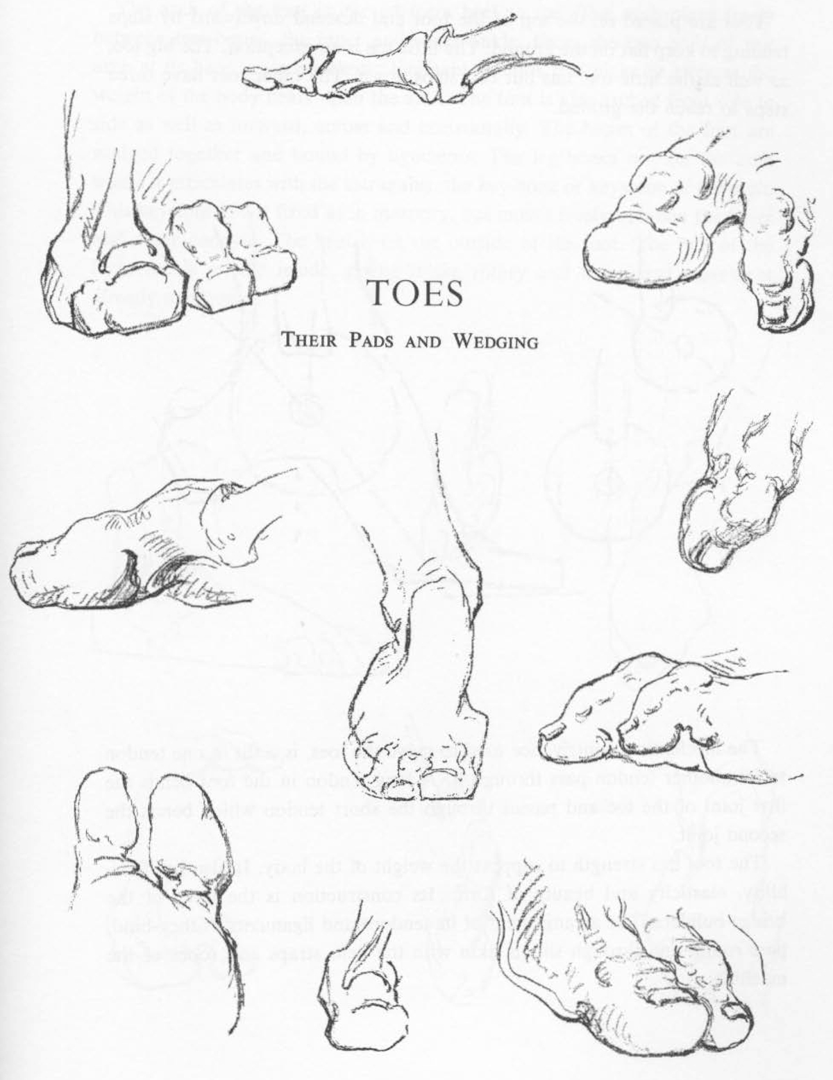 Toe Drawing at GetDrawings.com | Free for personal use Toe Drawing ...