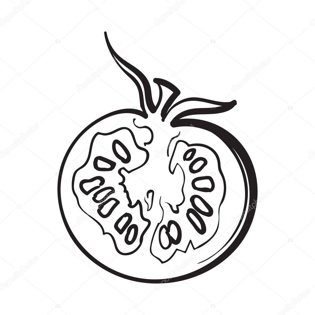 1024x1024 Sketch Style Drawing Of Ripe Half Tomato Stock Vector