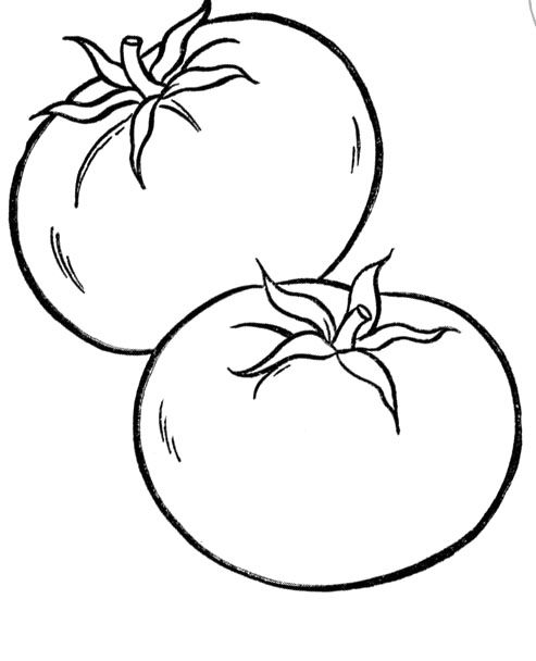 Tomato line drawing at free for personal for Tomato plant coloring page