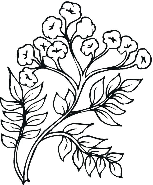 Tomato plant drawing at free for for Tomato plant coloring page