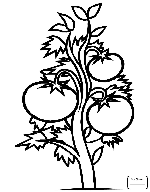 1195x1530 Tomato Plant Coloring Page Squash