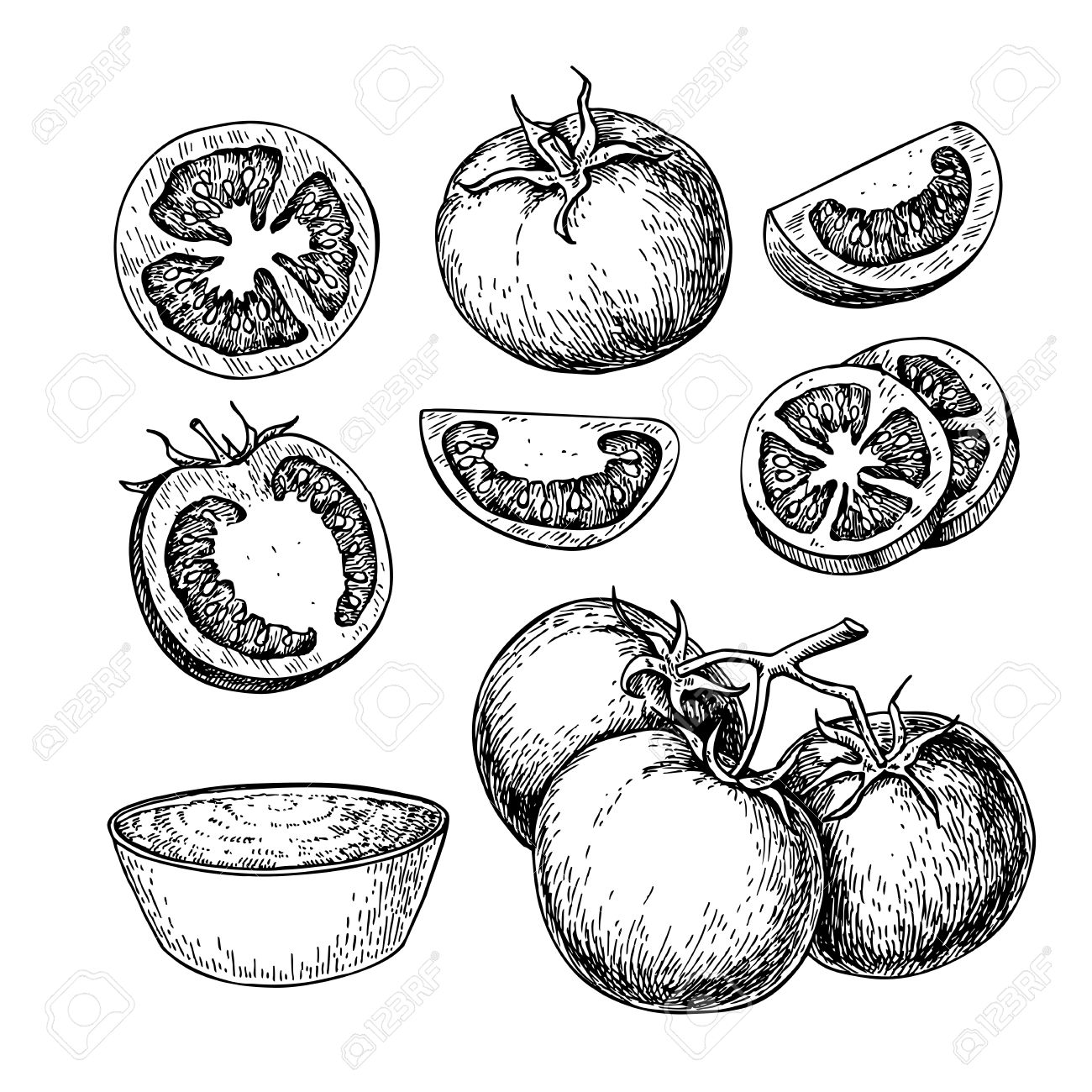 1300x1300 Tomato Vector Drawing Set. Isolated Tomato, Sliced Piece