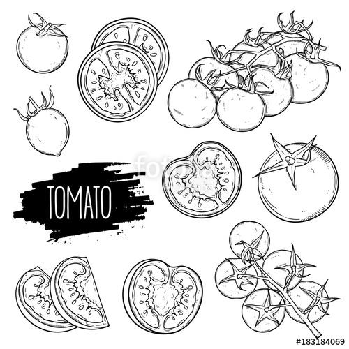 500x500 Hand Drawn Tomato Set. Tomatoes, Slices, Halves, Cherry Tomatoes