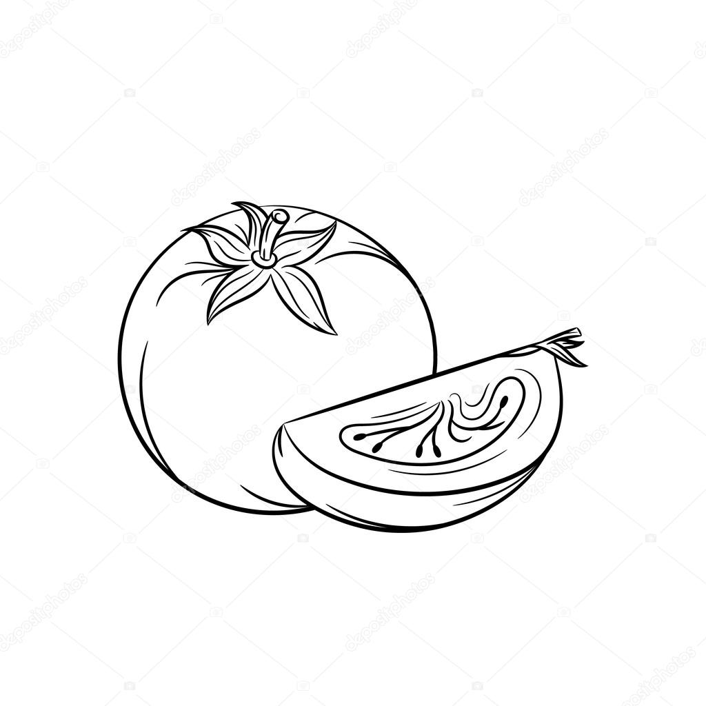 1024x1024 Hand Drawn Tomato Sketches On White Background Stock Vector