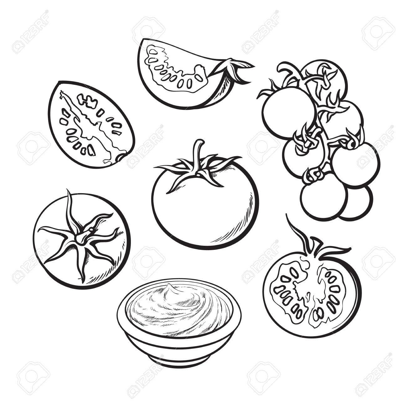 1300x1300 Set Of Sketch Style Vector Illustrations Of Ripe Tomatoes Isolated