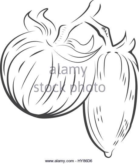 458x540 Tomato Plant Black And White Stock Photos Amp Images