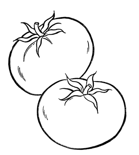 560x625 Dazzling Tomato Coloring Pages Healthy Vegetables Page Kids