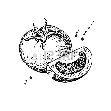 450x450 Tomato Vector Drawing. Isolated Tomato And Sliced Piece. Vegetable