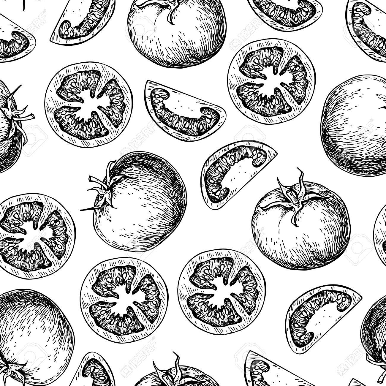 1300x1300 Vector Tomato Seamless Pattern Drawing. Isolated Tomatoes