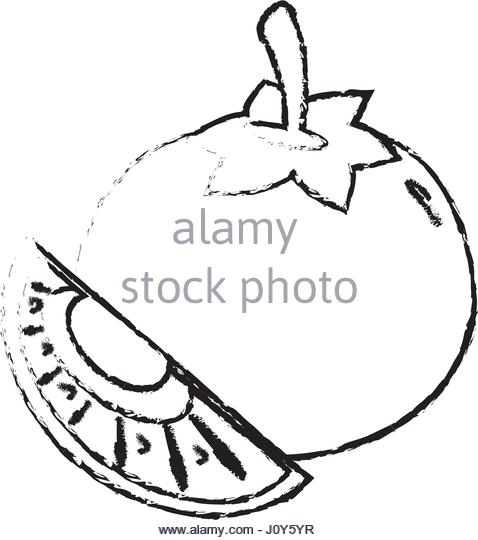 478x540 Drawing Slice Tomato Stock Photos Amp Drawing Slice Tomato Stock