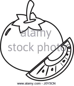 300x348 Drawing Of A Slice Of Tomato Stock Photo, Royalty Free Image