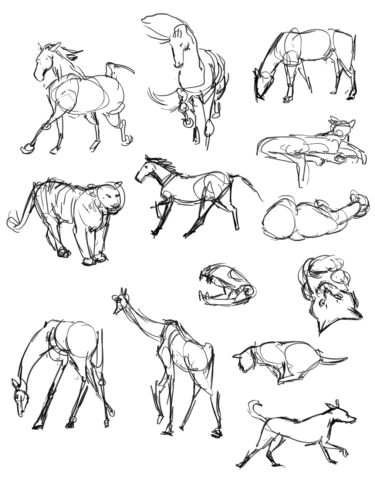 1236x1600 Casey Hunt Gesture Drawing Tool Animals!