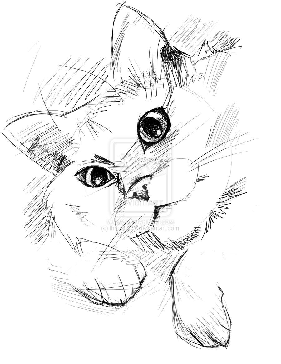 900x1165 Kitty