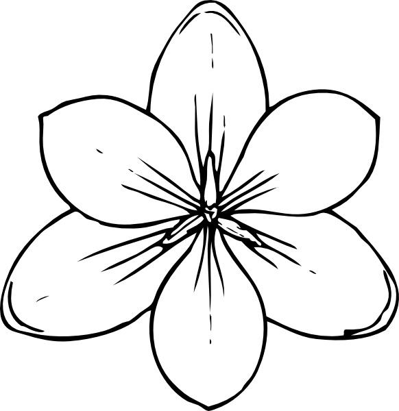 582x600 Crocus Flower Top View Clip Art Free Vector In Open Office Drawing