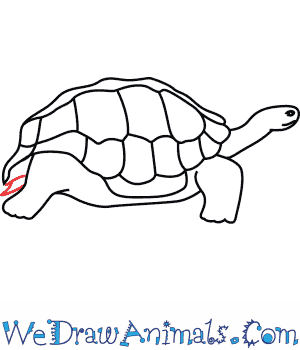 300x350 How To Draw A Galapagos Tortoise