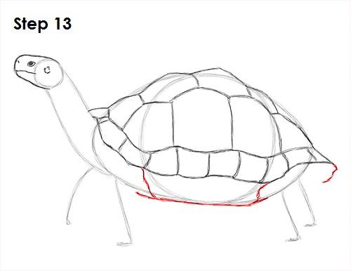 500x386 How To Draw A Tortoise