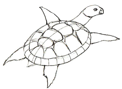 400x292 How To Draw A Turtle