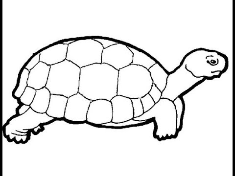 480x360 How To Draw A Turtle
