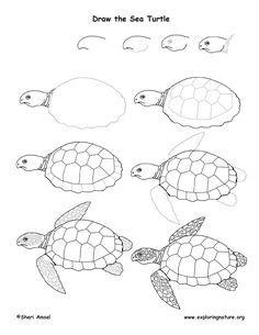 236x305 Image Result For Line Art Turtle Turtles Turtle