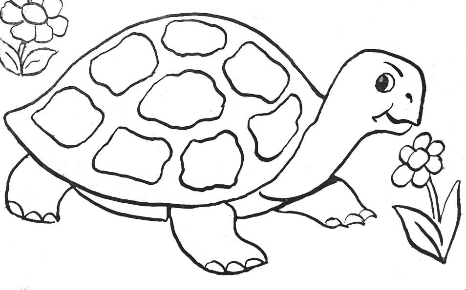 954x595 Tortoise