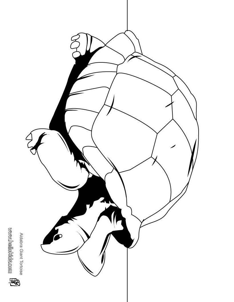 820x1060 Tortoise Coloring Pages, Videos For Kids, Drawing For Kids