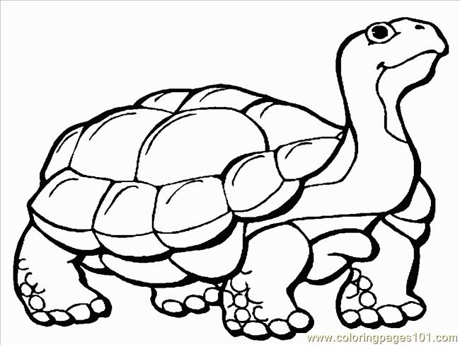 650x487 Tortoise 1 Coloring Page