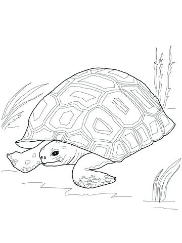 360x480 Tortoise Coloring Page Click To See Printable Version Of Gopher