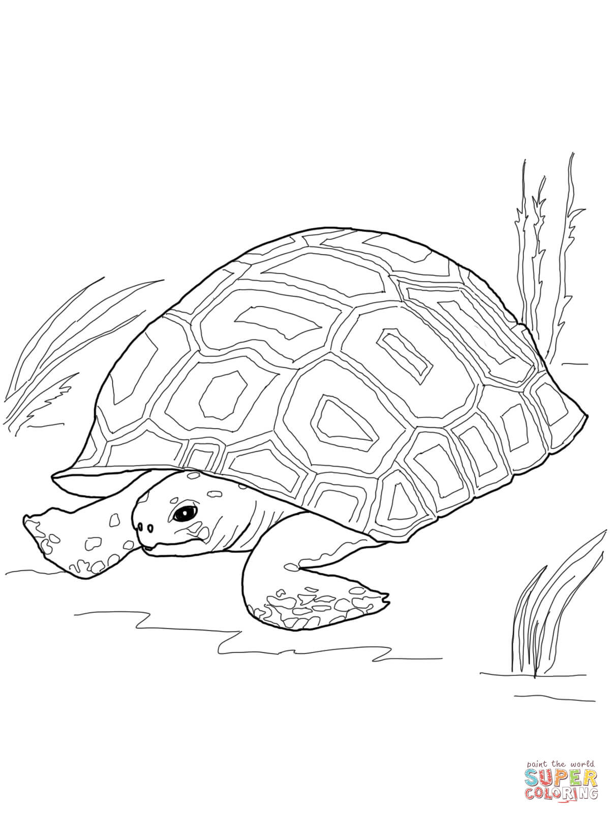 1200x1600 Tortoise Coloring Pages