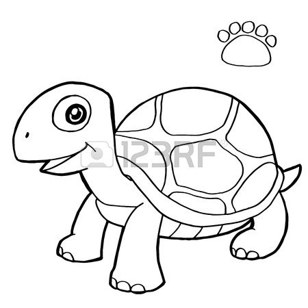 Turtle Shell Drawing Color