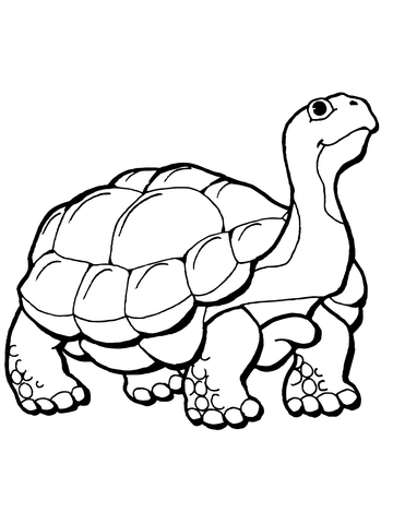 360x480 Tortoise Coloring Page Free Printable Coloring Pages