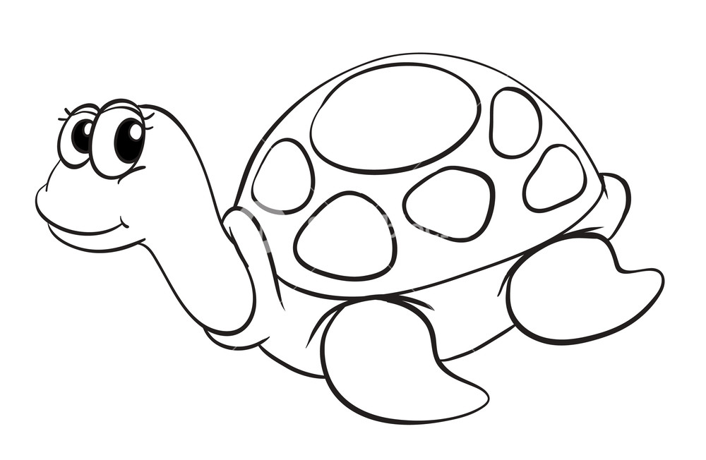 1000x652 Illustration Of A Tortoise Sketch On A White Background Royalty