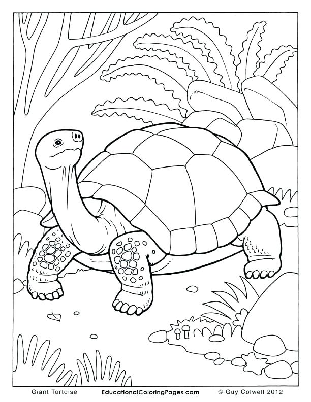 612x792 Tortoise Coloring Page Genesisar.co