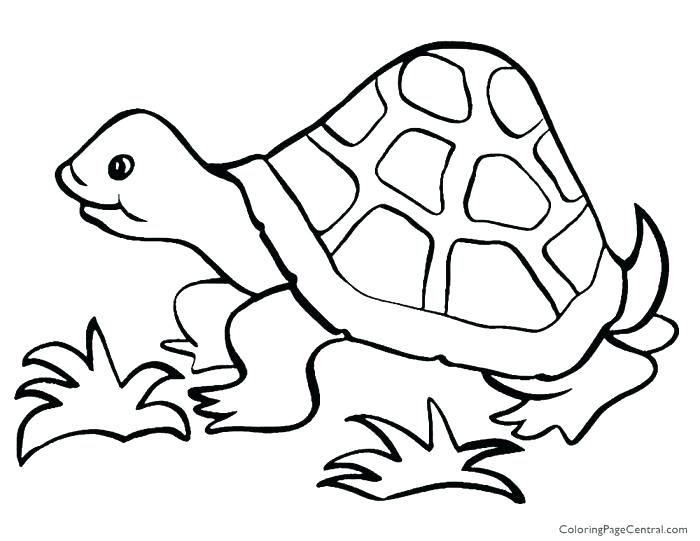 700x541 Elegant Tortoise Coloring Page Kids Coloring Pages